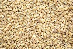 Pearl barley grain background Stock Photography