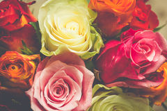 Closeup background of pink, red, white roses. Petals Royalty Free Stock Image