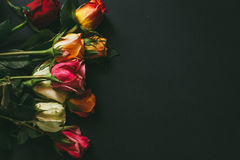 Closeup background of pink, red, white roses Royalty Free Stock Photos