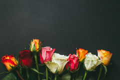Closeup background of pink, red, white roses Royalty Free Stock Photography