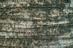 Closeup background. Of Tree bark texture stock photography