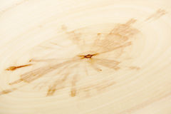 Closeup background of year rings texture of the unique relict ash tree (Fraxinus sogdiana). stock image