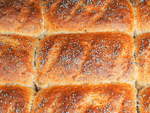 Closeup of baked rolls with poppy seeds. Attached to each other Royalty Free Stock Image