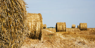 Closeup of bale of hay Royalty Free Stock Images