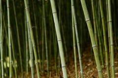 Closeup of bamboo Stock Images