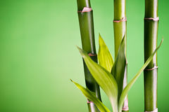 Closeup of bamboo and leaves Royalty Free Stock Photos