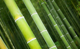 Closeup of bamboo trunks Royalty Free Stock Image