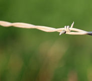 Closeup of Barbed Wire Stock Photo