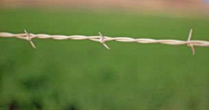 Closeup of Barbed Wire Royalty Free Stock Images