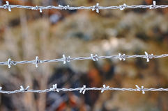 Closeup of barbed wire in winter. Royalty Free Stock Images