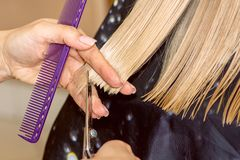 Closeup barber hairdresser cuts blond hair in a beauty salon. back view with sunlight. Closeup barber hairdresser cuts a blond hair in a beauty salon. back view royalty free stock images