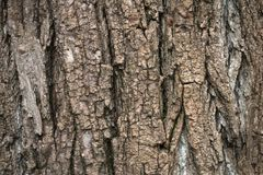 Closeup of bark on an old tree royalty free stock photo