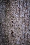 Closeup of Bark royalty free stock image