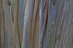 Closeup of the bark of an  tree Stock Photos