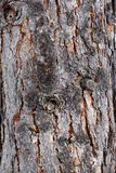 Closeup of bark Royalty Free Stock Images