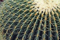 Closeup of a Barrel Cactus Royalty Free Stock Photo