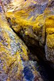 Rock wall covered with yellow lichen. Closeup of basalt rock at the seaside covered with yellow colored lichen. Location Hug Point, Oregon Stock Photos