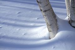 Birch trunk in the snow Royalty Free Stock Photos