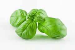 Closeup on basil leaf Stock Photos