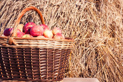 Closeup of basket with apples Stock Images