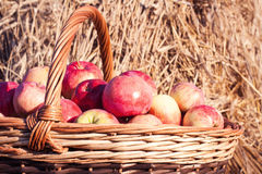 Closeup of basket with apples Stock Photography