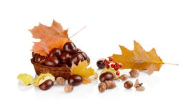 Closeup basket with chestnuts and leaves isolated on white Royalty Free Stock Photography