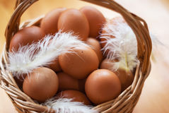 Closeup, of a basket with organic chicken eggs and feathers. Defo Royalty Free Stock Photos