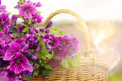 Closeup of basket with purple mallow Royalty Free Stock Photography