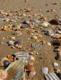 Closeup of a beach filled with a variety of shells Royalty Free Stock Images