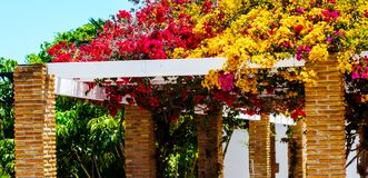Closeup on a beautiful arbor covered with climbing plants with c. Olorful flowers, relax place, architecture Stock Image
