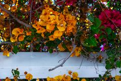 Closeup on a beautiful arbor covered with climbing plants with c. Olorful flowers, relax place, architecture Stock Photo