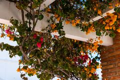 Closeup on a beautiful arbor covered with climbing plants with c. Olorful flowers, relax place, architecture Royalty Free Stock Image