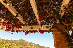 Closeup on a beautiful arbor covered with climbing plants with c. Olorful flowers, relax place, architecture Stock Photography