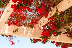 Closeup on a beautiful arbor covered with climbing plants with c. Olorful flowers, relax place, architecture Royalty Free Stock Photo