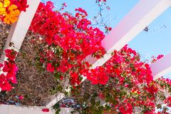 Closeup on a beautiful arbor covered with climbing plants with c. Olorful flowers, relax place, architecture Stock Images