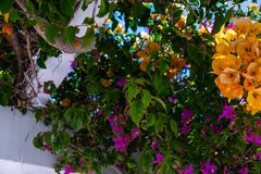 Closeup on a beautiful arbor covered with climbing plants with c. Olorful flowers, relax place, architecture Stock Photos
