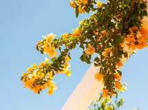 Closeup on a beautiful arbor covered with climbing plants with c. Olorful flowers, relax place, architecture Royalty Free Stock Photos