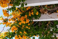 Closeup on a beautiful arbor covered with climbing plants with c. Olorful flowers, relax place, architecture Royalty Free Stock Images