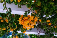 Closeup on a beautiful arbor covered with climbing plants with c. Olorful flowers, relax place, architecture Royalty Free Stock Photography