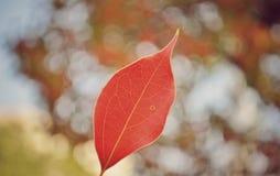 Closeup on beautiful autumn leaf stock images