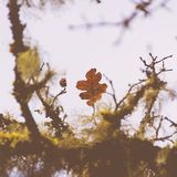 Closeup of beautiful Autumn leaves in a forest with a blurred natural background stock photo