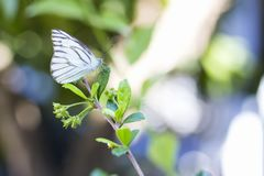 Closeup beautiful butterfly perched on leaves. Closeup one beautiful butterfly perched on leaves at bright day stock image