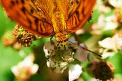 Closeup beautiful butterfly sitting on flower in spring royalty free stock photo
