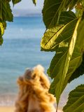 Closeup of beautiful fig leaf with calm beach and sea in the background royalty free stock photos
