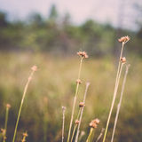 Closeup of beautiful green grass with blur background. Vintage. Stock Photography