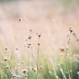 Closeup of beautiful green grass with blur background. Vintage. Closeup of beautiful green grass with blur background. Vintage photography effect Royalty Free Stock Photo