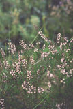 Closeup of beautiful green plants with blur background. Vintage. Stock Images