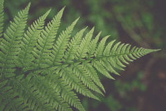 Closeup of beautiful green plants with blur background. Vintage. Royalty Free Stock Photos