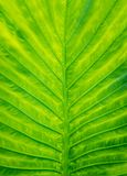 Closeup beautiful Natural green leaf llight background Stock Image