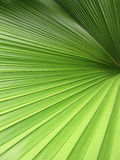 Closeup beautiful palm leaves of tree in sunlight Royalty Free Stock Image